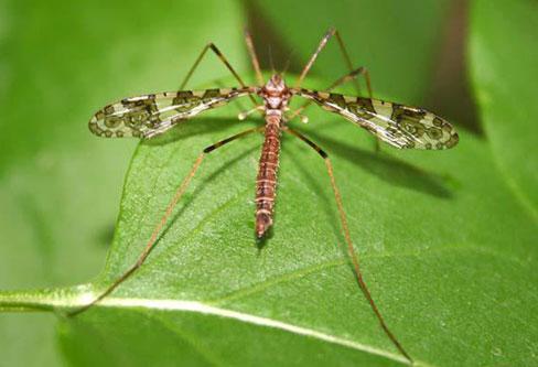 Carne Flies pest control