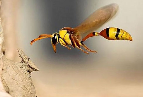 Are Wasp Stings Dangerous to Humans?