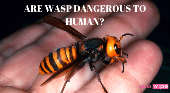Are Wasp Dangerous to Human