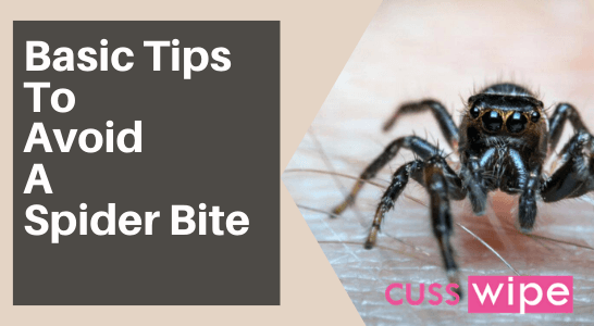 Basic Tips To Avoid A Spider Bite