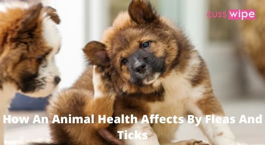 How An Animal Health Affects By Fleas And Ticks