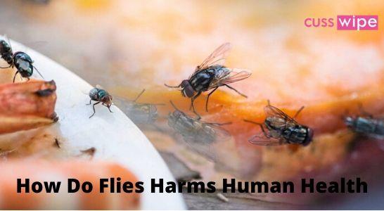 How Do Flies Harms Human Health