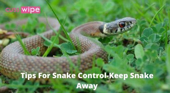 Tips For Snake Control-Keep Snake Away