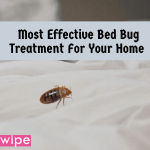 Most Effective Bed Bug Treatment For Your Home