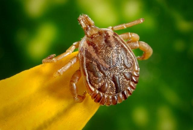 Fleas and Ticks Prevention Tips